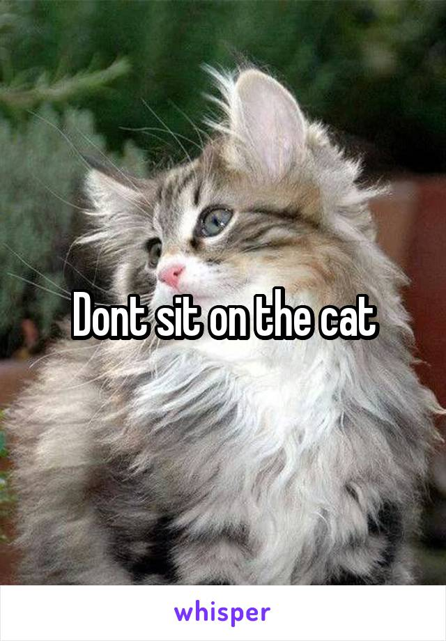 Dont sit on the cat