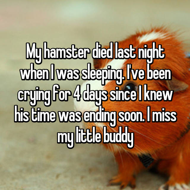 My hamster died last night when I was sleeping  I've been