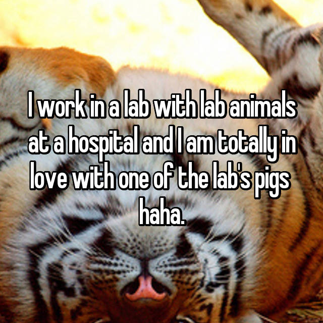 I work in a lab with lab animals at a hospital and I am totally in love with one of the lab's pigs  haha.