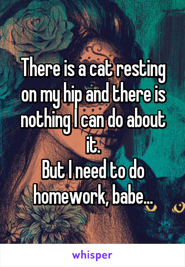 There is a cat resting on my hip and there is nothing I can do about it. But I need to do homework, babe...