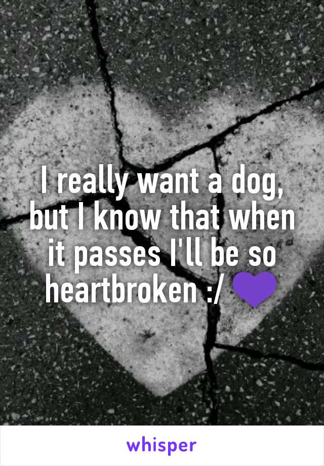 I really want a dog, but I know that when it passes I'll be so heartbroken :/ 💜
