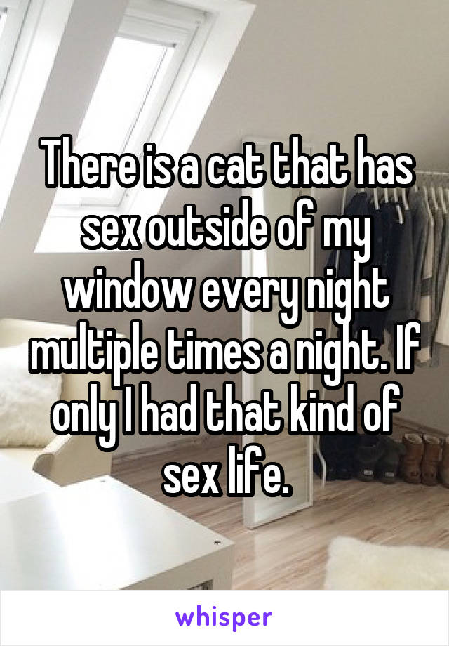 Sex window night
