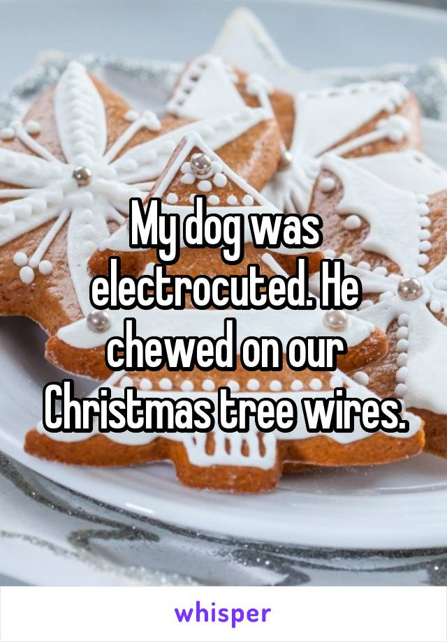 My dog was electrocuted. He chewed on our Christmas tree wires.