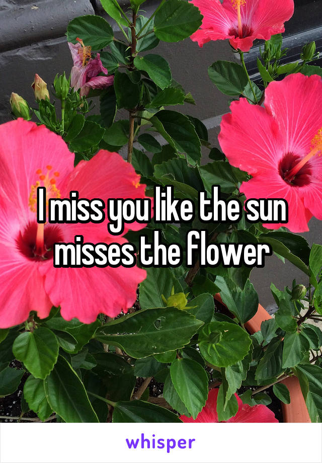 i miss you like the sun misses the flower