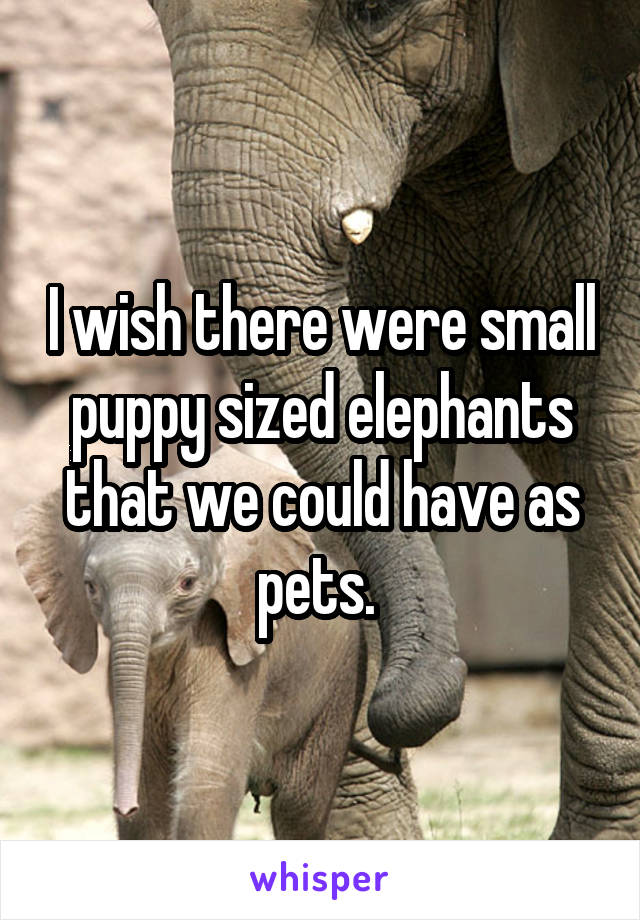 I wish there were small puppy sized elephants that we could have as pets.