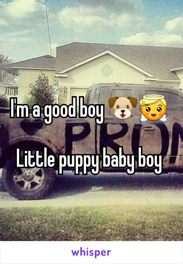 I'm a good boy 🐶😇   Little puppy baby boy