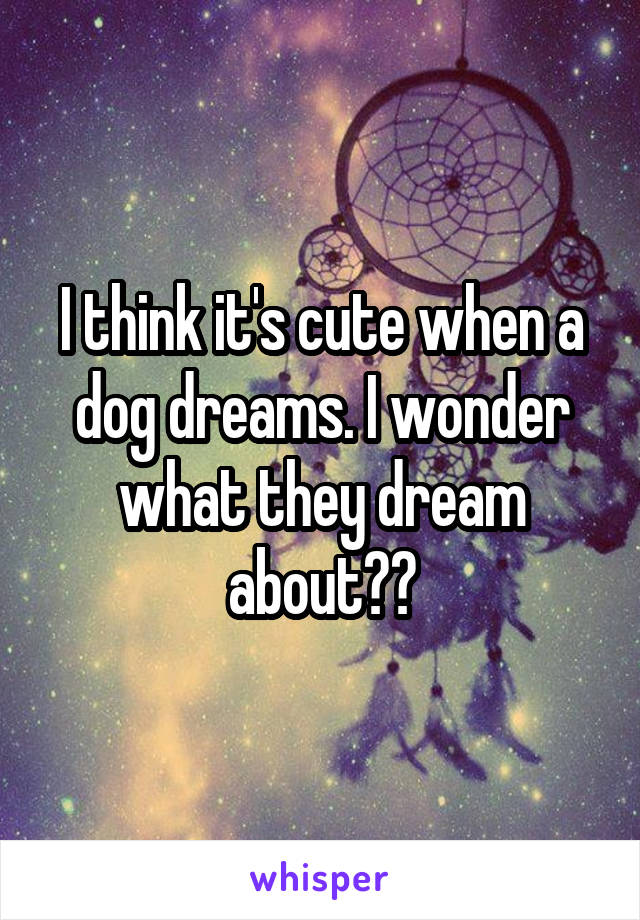 I think it's cute when a dog dreams. I wonder what they dream about??