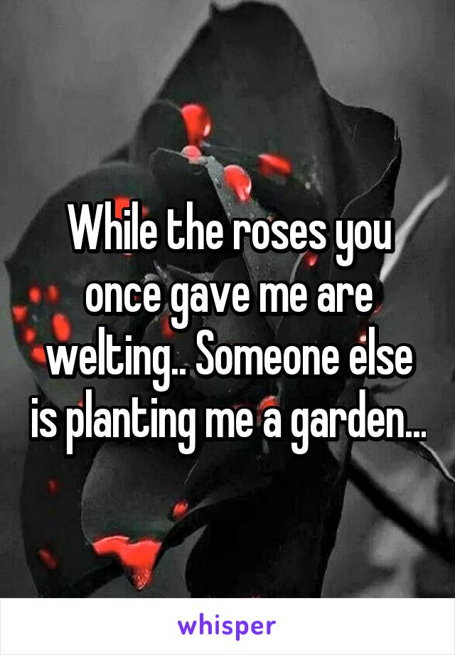 While the roses you once gave me are welting.. Someone else is planting me a garden...