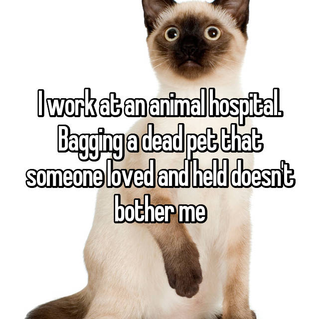 I work at an animal hospital. Bagging a dead pet that someone loved and held doesn't bother me
