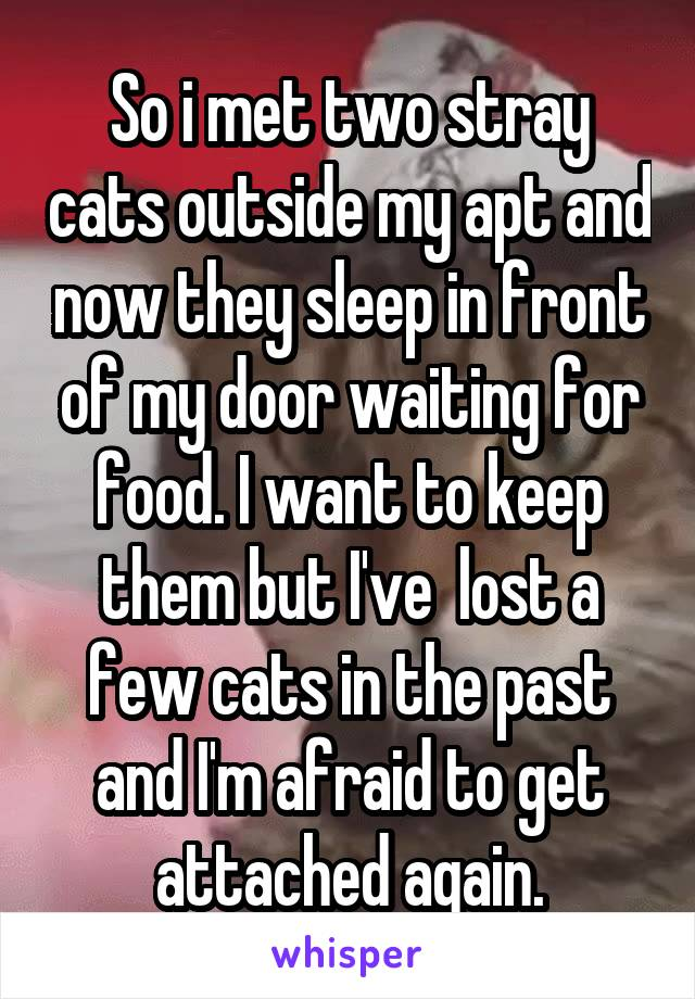 So i met two stray cats outside my apt and now they sleep in front of my door waiting for food. I want to keep them but I've  lost a few cats in the past and I'm afraid to get attached again.