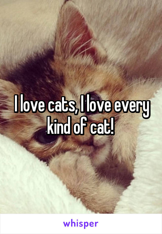 I love cats, I love every kind of cat!