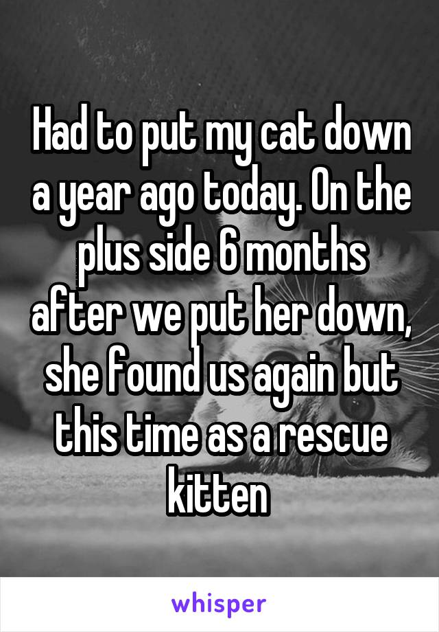 Had to put my cat down a year ago today. On the plus side 6 months after we put her down, she found us again but this time as a rescue kitten