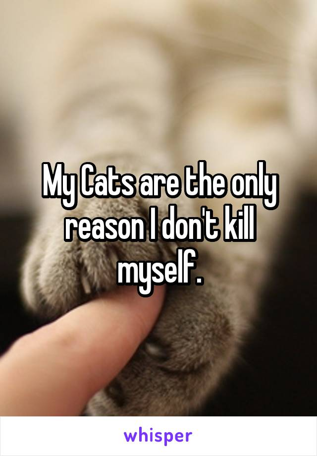 My Cats are the only reason I don't kill myself.