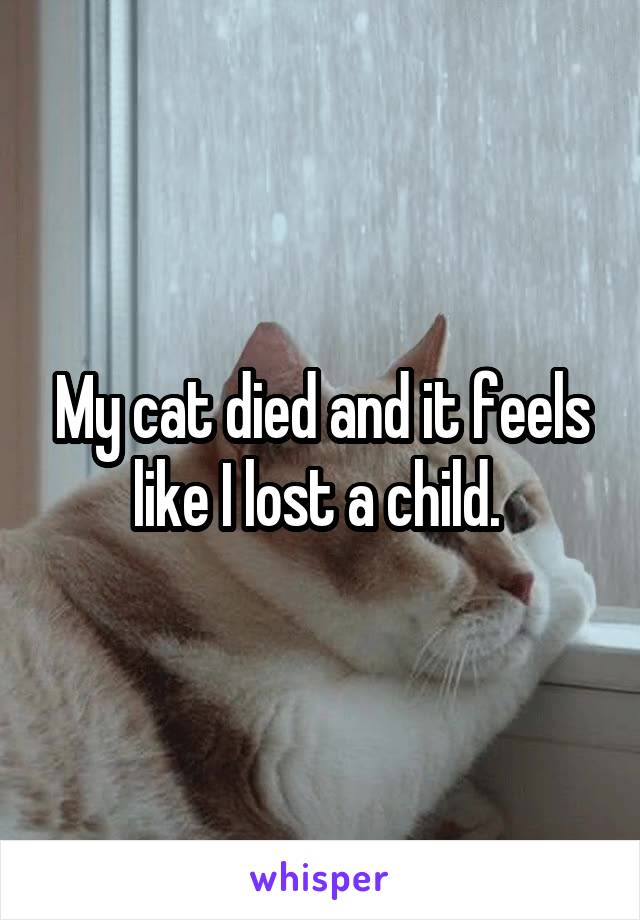 My cat died and it feels like I lost a child.