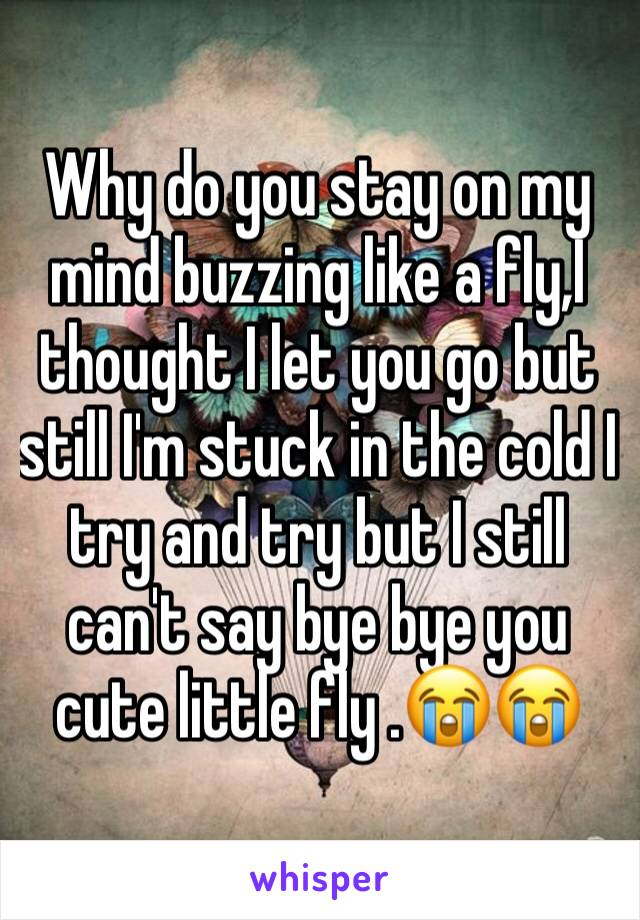 Why do you stay on my mind buzzing like a fly,I thought I let you go but still I'm stuck in the cold I try and try but I still can't say bye bye you cute little fly .😭😭