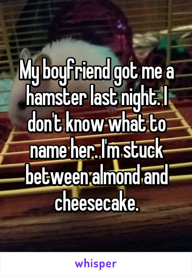 My boyfriend got me a hamster last night. I don't know what to name her. I'm stuck between almond and cheesecake.