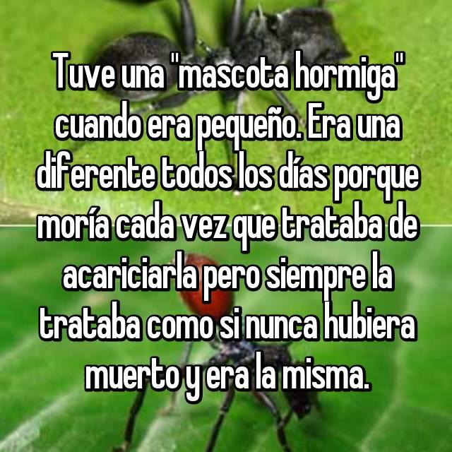 """Tuve una """"mascota hormiga"""" cuando era pequeño. Era una diferente todos los días porque moría cada vez que trataba de acariciarla pero siempre la trataba como si nunca hubiera muerto y era la misma."""