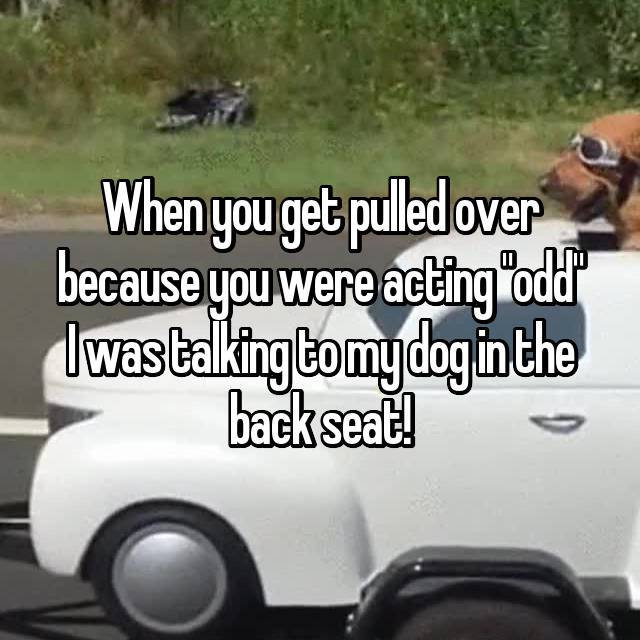 "When you get pulled over because you were acting ""odd"" I was talking to my dog in the back seat!"