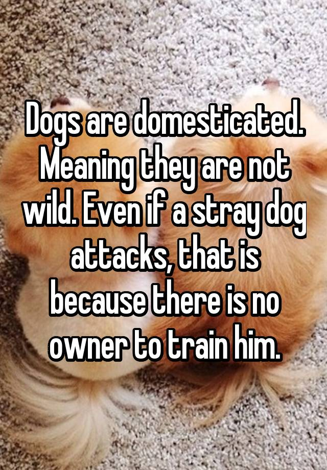 Dogs are domesticated  Meaning they are not wild  Even if a