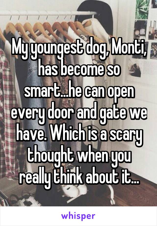 My youngest dog, Monti, has become so smart...he can open every door and gate we have. Which is a scary thought when you really think about it...