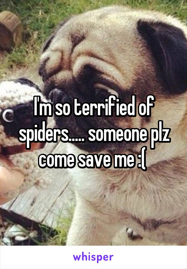 I'm so terrified of spiders..... someone plz come save me :(