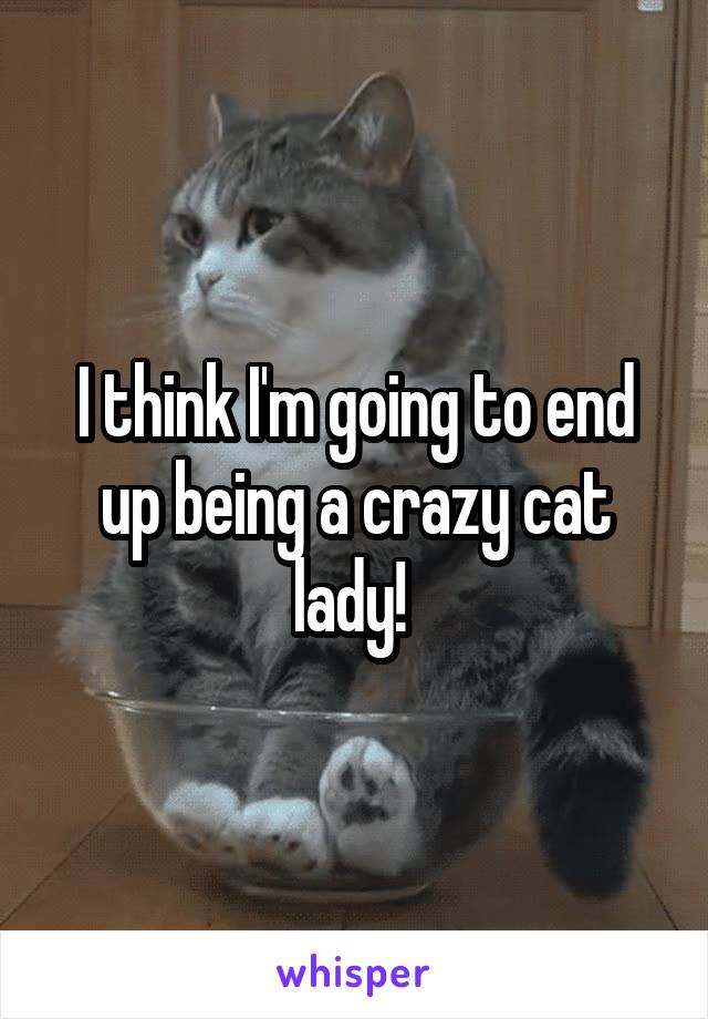 I think I'm going to end up being a crazy cat lady!