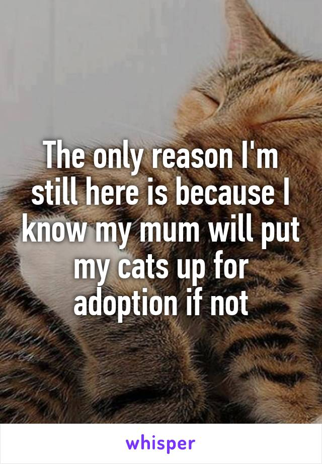 The only reason I'm still here is because I know my mum will put my cats up for adoption if not