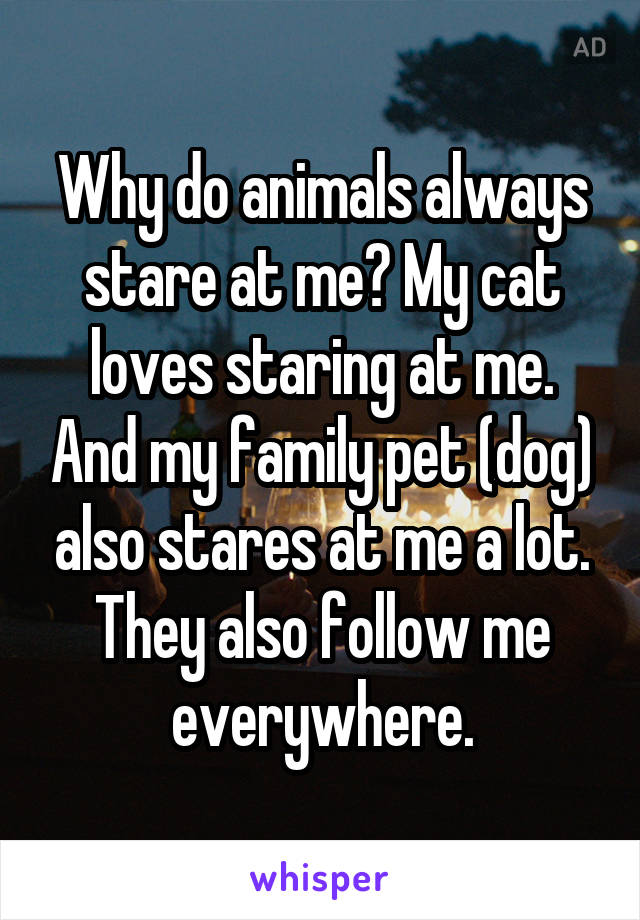 Why do animals always stare at me? My cat loves staring at me. And my family pet (dog) also stares at me a lot. They also follow me everywhere.