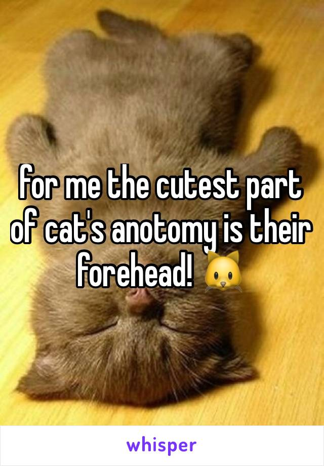 for me the cutest part of cat's anotomy is their forehead! 🐱