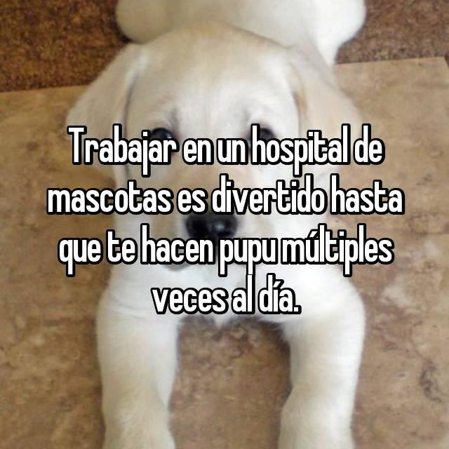 Trabajar en un hospital de mascotas es divertido hasta que te hacen pupu múltiples veces al día.