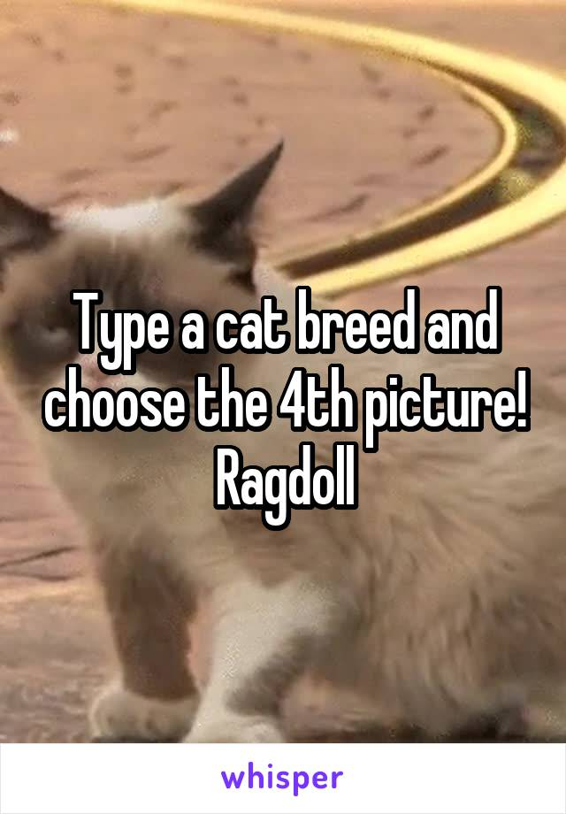 Type a cat breed and choose the 4th picture! Ragdoll