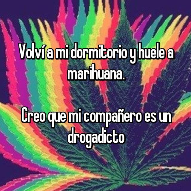 Volví a mi dormitorio y huele a marihuana.  Creo que mi compañero es un drogadicto