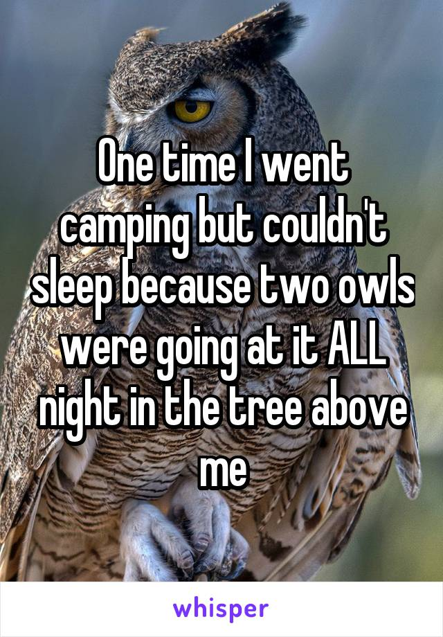 One time I went camping but couldn't sleep because two owls were going at it ALL night in the tree above me