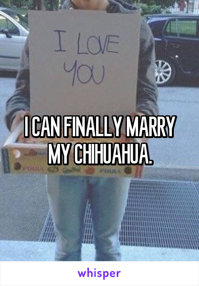 I CAN FINALLY MARRY MY CHIHUAHUA.