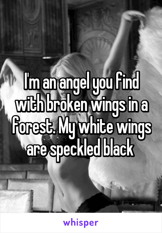 I'm an angel you find with broken wings in a forest. My white wings are speckled black