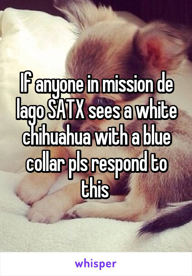 If anyone in mission de lago SATX sees a white chihuahua with a blue collar pls respond to this