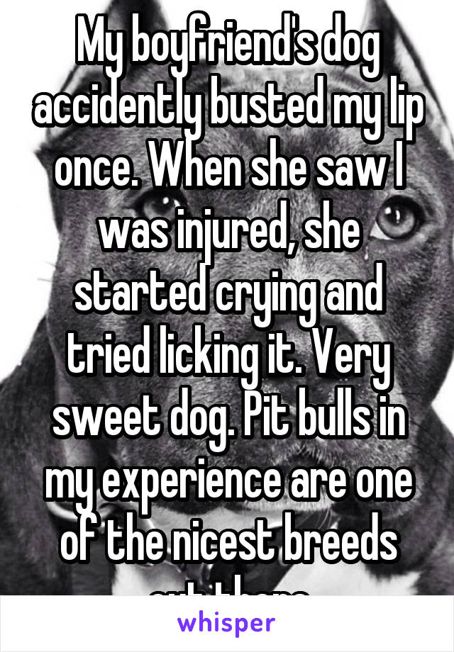 My boyfriend's dog accidently busted my lip once. When she saw I was injured, she started crying and tried licking it. Very sweet dog. Pit bulls in my experience are one of the nicest breeds out there