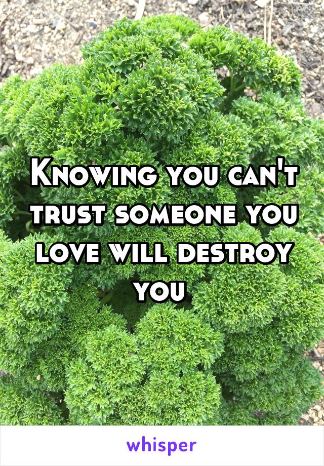 Knowing you can't trust someone you love will destroy you