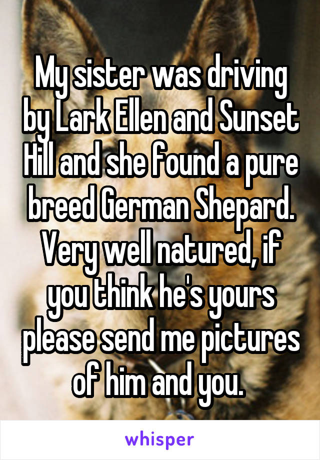 My sister was driving by Lark Ellen and Sunset Hill and she found a pure breed German Shepard. Very well natured, if you think he's yours please send me pictures of him and you.