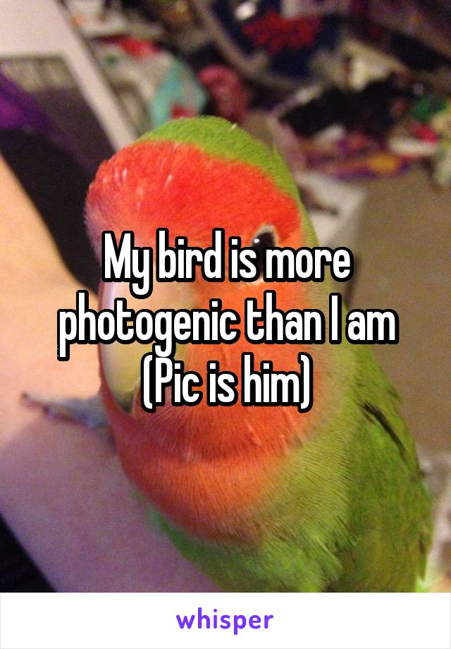 My bird is more photogenic than I am (Pic is him)