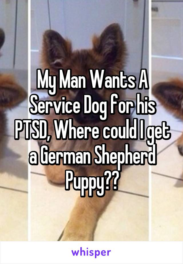 My Man Wants A Service Dog for his PTSD, Where could I get a German Shepherd Puppy??