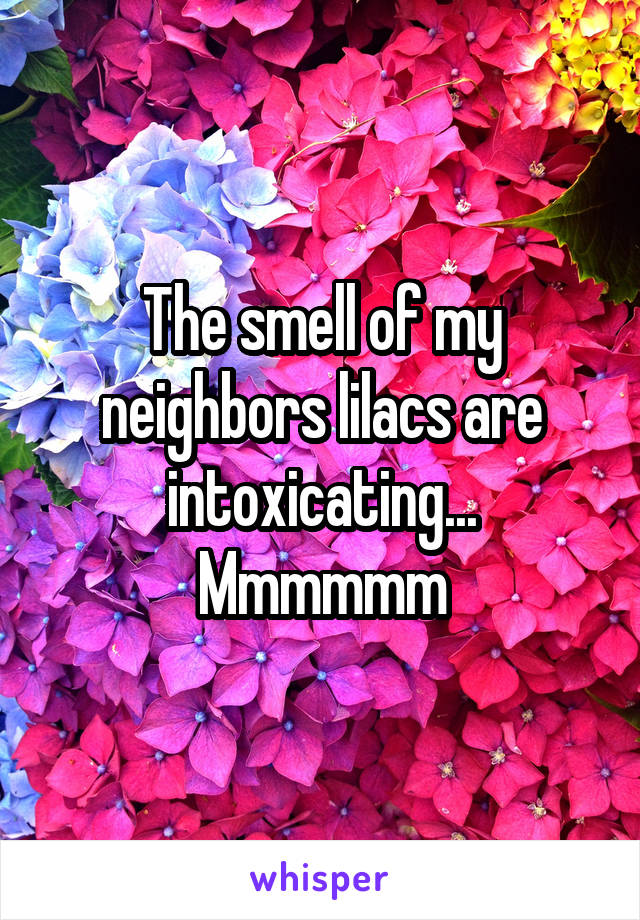 The smell of my neighbors lilacs are intoxicating... Mmmmmm