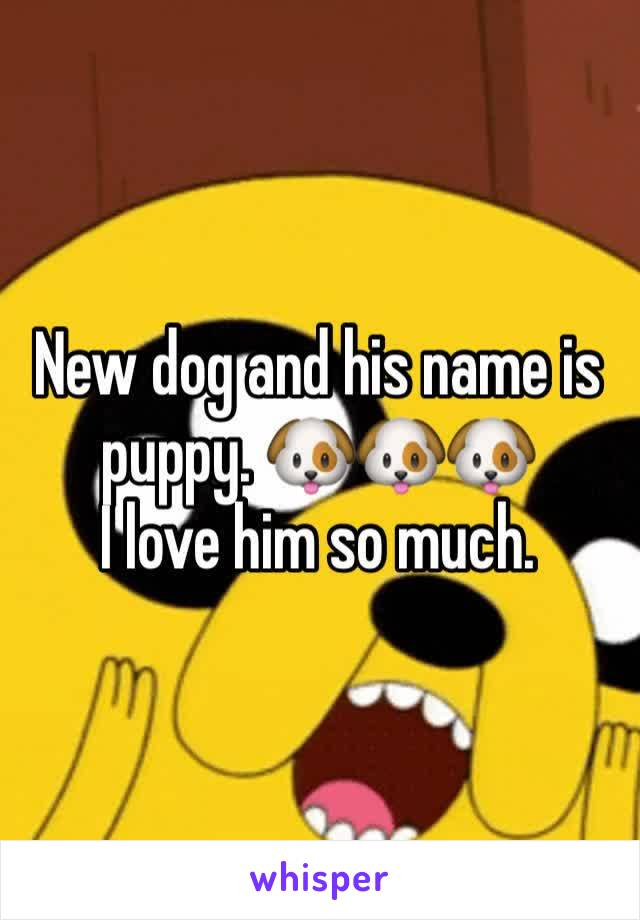 New dog and his name is puppy. 🐶🐶🐶 I love him so much.