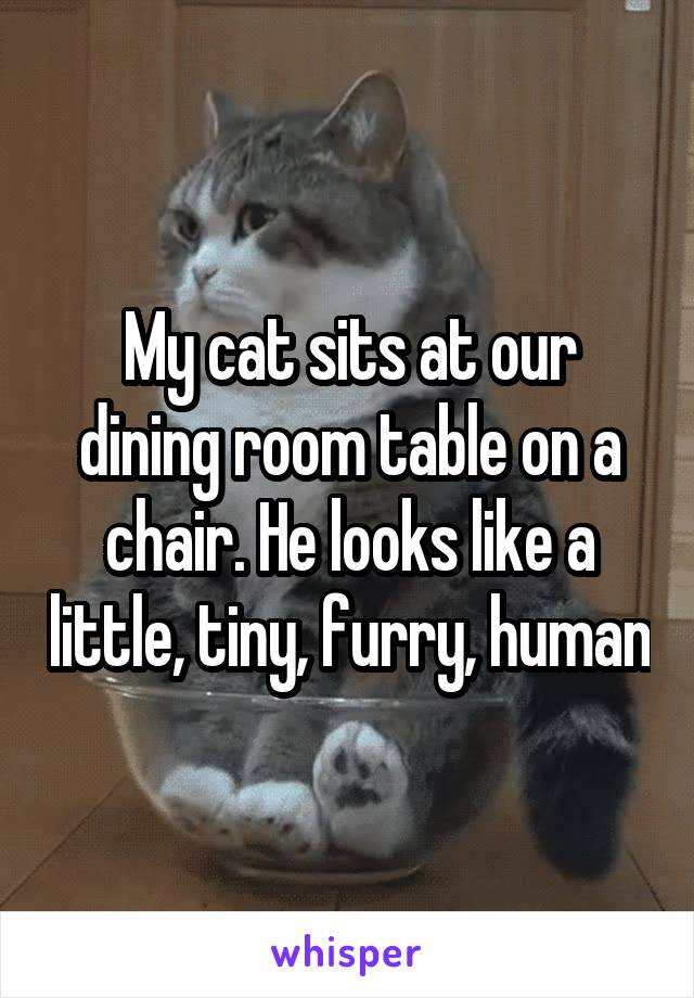 My cat sits at our dining room table on a chair. He looks like a little, tiny, furry, human