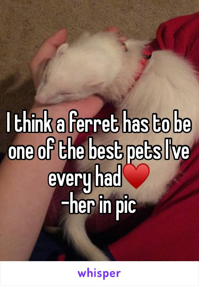 I think a ferret has to be one of the best pets I've every had♥️  -her in pic