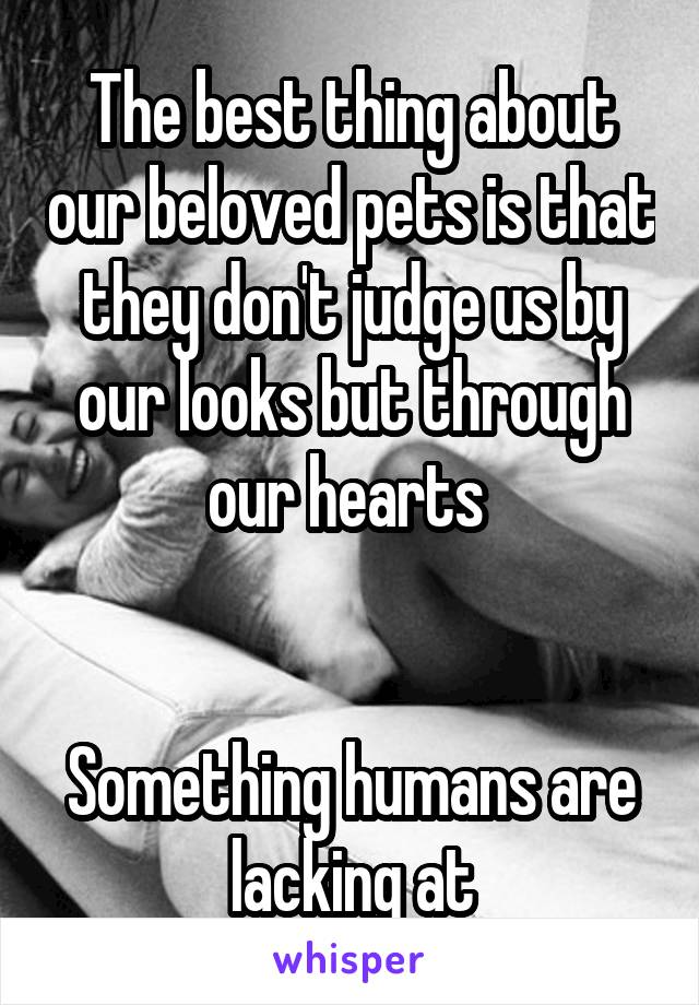 The best thing about our beloved pets is that they don't judge us by our looks but through our hearts    Something humans are lacking at