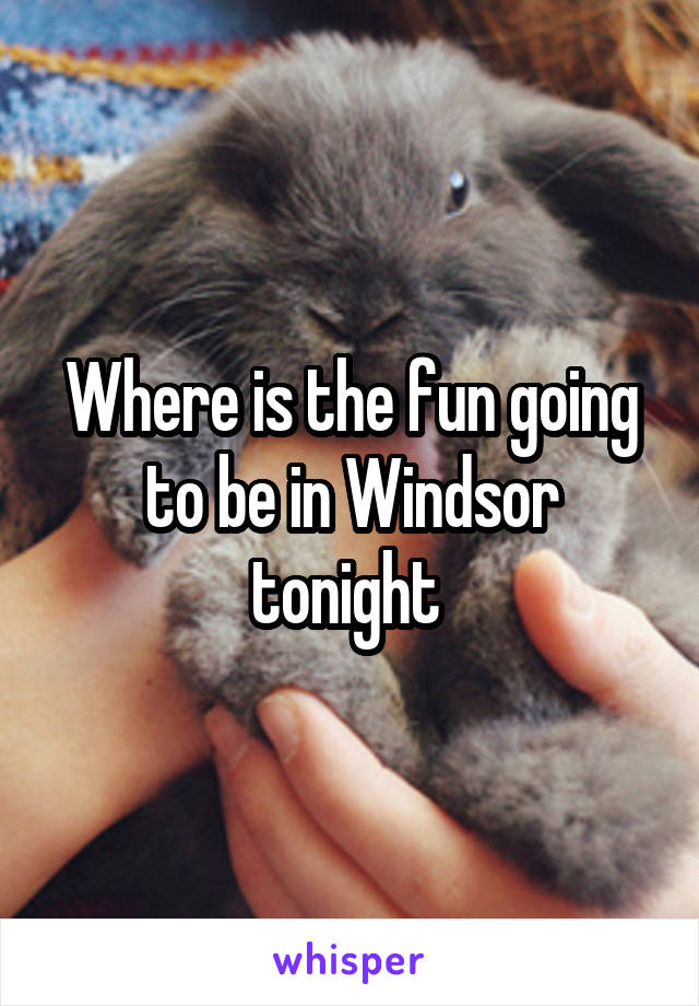 Where is the fun going to be in Windsor tonight