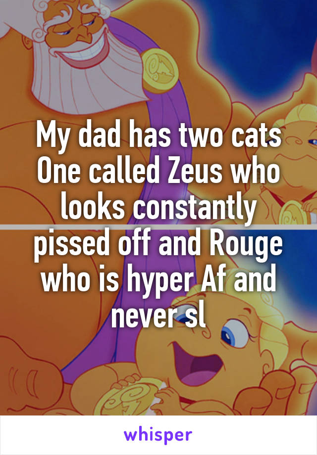 My dad has two cats One called Zeus who looks constantly pissed off and Rouge who is hyper Af and never sl