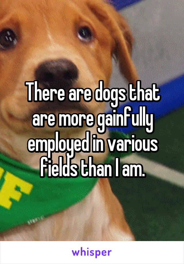 There are dogs that are more gainfully employed in various fields than I am.