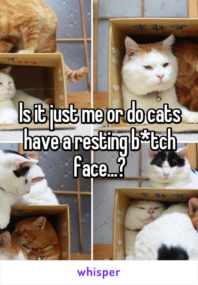Is it just me or do cats have a resting b*tch face...?